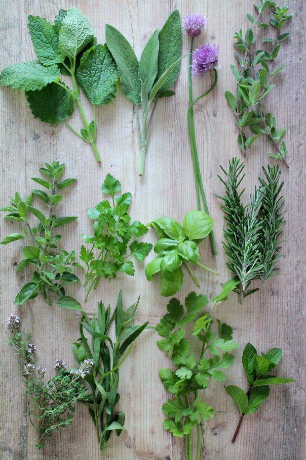 le migliori erbe aromatiche da utilizzare in cucina 2
