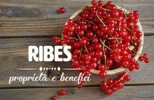 Ribes: proprietà, benefici e controindicazioni
