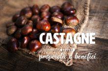 Castagne: proprietà, benefici e controindicazioni