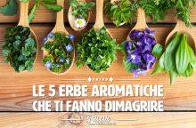 Le 5 erbe aromatiche per dimagrire