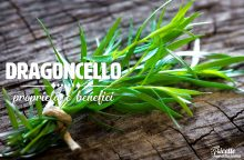 Dragoncello: proprietà, benefici e controindicazioni