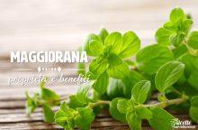 Maggiorana: proprietà, benefici e controindicazioni